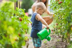 Cute toddler helphing mom in the garden stock images