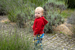 Cute toddler outdoors Stock Images