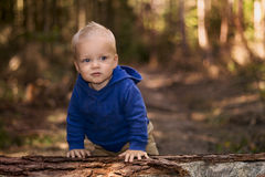 Cute toddler is standing leaning on a tree in the autumn forest. Blurred background. Copy space Stock Photo