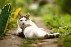 Cute tom male cat funny photo wash himself on summer green garden background. Cute tom male cat wash himself on summer green garden background Royalty Free Stock Photo