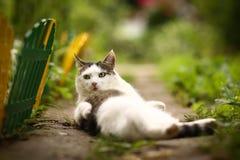 Male cat wash himself on summer green garden background. Cute tom male cat wash himself on summer green garden background Stock Photo