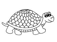 Cute tortoise isolated on the white background Royalty Free Stock Photos