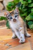 Cute tortoiseshell kitten royalty free stock photography