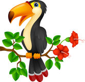 Cute toucan bird cartoon Royalty Free Stock Photos