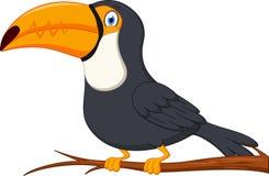 Cute toucan bird cartoon Stock Photos