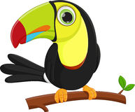 Cute toucan bird cartoon Stock Image