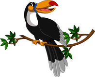 Cute toucan sitting on tree Stock Images