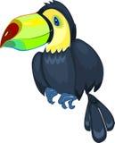 Cute toucan Stock Photography