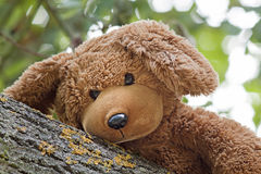 Cute toy bear Royalty Free Stock Image