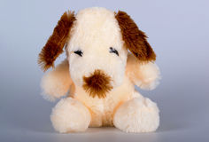 Cute toy dog. Cute sitting beige plush puppy, clever, feel good soft and very pretty Royalty Free Stock Images