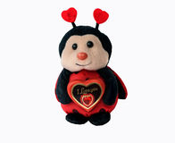 Cute toy ladybird is holding red chocolate heart with the text stock photo