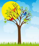 Cute tree and birds Royalty Free Stock Images