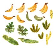 Cute tropcal set with bananas, cacti and leaves. Isolated on white background elements painting in gouache. Cute tropcal set with bananas, cacti and leaves stock illustration