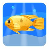 Cute Tropical fish, orange color in sea, ocean, cartoon style, vector illustration, isolated. Cute Tropical fish, orange color in sea, ocean, cartoon style Royalty Free Stock Image