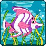 Cute Tropical Fish Stock Photo