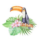 Cute tropical tucan sitting on the  branch in tropical leaves . Hand panted watercolor illustration. Cute tropical tucan sitting on the  branch in tropical Royalty Free Stock Photo