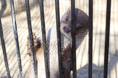 Cute true otter Stock Images