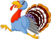 Cute turkey running Royalty Free Stock Photo