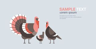 Cute turkeys family cartoon farm domestic birds animals concept flat horizontal copy space. Vector illustration vector illustration