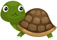 Cute turtle. Illustration of isolated cute turtle on white background stock illustration