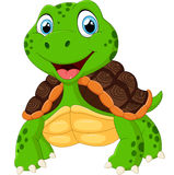 Cute turtle cartoon posing Stock Photography