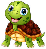 Cute turtle cartoon smiling Stock Image