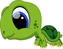 Cute turtle cartoon Stock Images