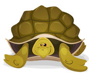 Cute Turtle Character Stock Photography