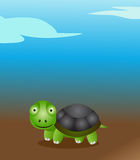 Cute turtle Stock Images