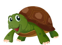 Cute turtle with happy face. Illustration Stock Photography