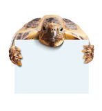 Cute turtle holding  a blank white board Royalty Free Stock Image