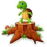 Cute turtle posing on tree stump Stock Image