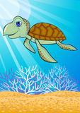 Cute turtle in the sea Royalty Free Stock Photography