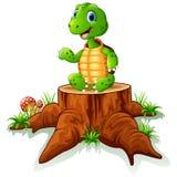Cute turtle sit on tree stump Royalty Free Stock Image