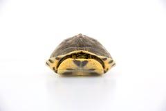 Cute turtle Stock Photos