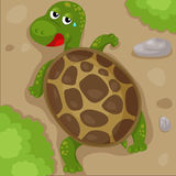 Cute turtle walking Stock Images