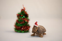 Cute Turtle wearing christmas hat Stock Images