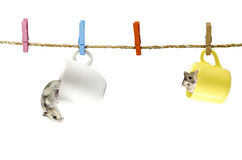 Cute two Hamster hanging on the clothesline. Stock Image