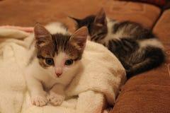 Cute kittens asleep on a sofa. Cute two kittens asleep on a sofa Stock Images