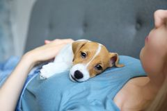Young woman with her jack russell terrier puppy royalty free stock photos