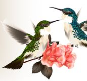 Cute valentine card with couple of humming bird and roses Royalty Free Stock Photo