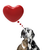 Cute valentine dog and cat together Royalty Free Stock Photography