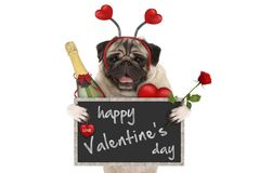 Cute valentine`s day pug dog with blackboard, champagne bottle, hearts diadem and rose. Isolated on white background Royalty Free Stock Photography