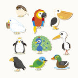 Cute vector bird set Royalty Free Stock Photos