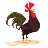 Cute vector cartoon Rooster isolated on white background. Royalty Free Stock Photos