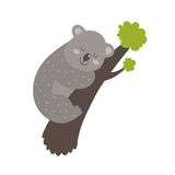 Cute vector koala. Cute vector cartoon koala with tree isolated on white background Stock Image