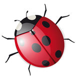 Cute vector Ladybird Royalty Free Stock Photos