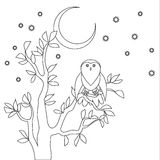 Cute vector owl. Coloring book. Owl sitting on the tree at the night vector illustration