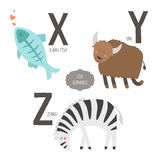 Cute vector zoo alphabet. With cartoon animals isolated on white background. X, y, z letters. X-ray fish, yak and zebra Royalty Free Stock Images