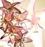 Lilies. Cute wallpaper with lilies. nature background Stock Image